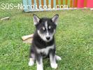 [ADOPTADA] - regalo cachorrita 2 meses