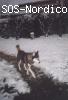 [Macho] - Siberian Husky - 7 años - Segovia