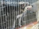 House- Perro de 3 patas Rescatado de la perrera